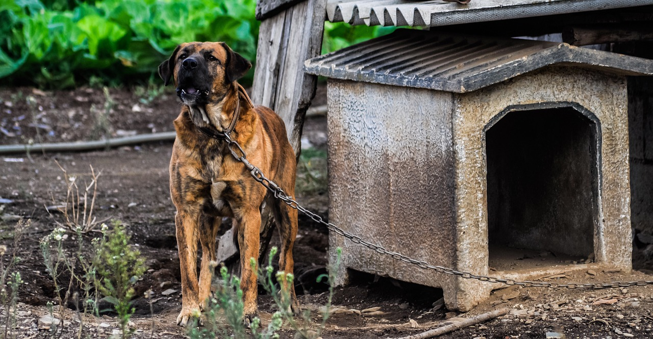 Construire-une-niche-pour-chien